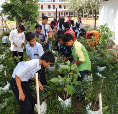 veg-farm
